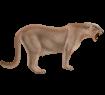 Puma - pelaje 2